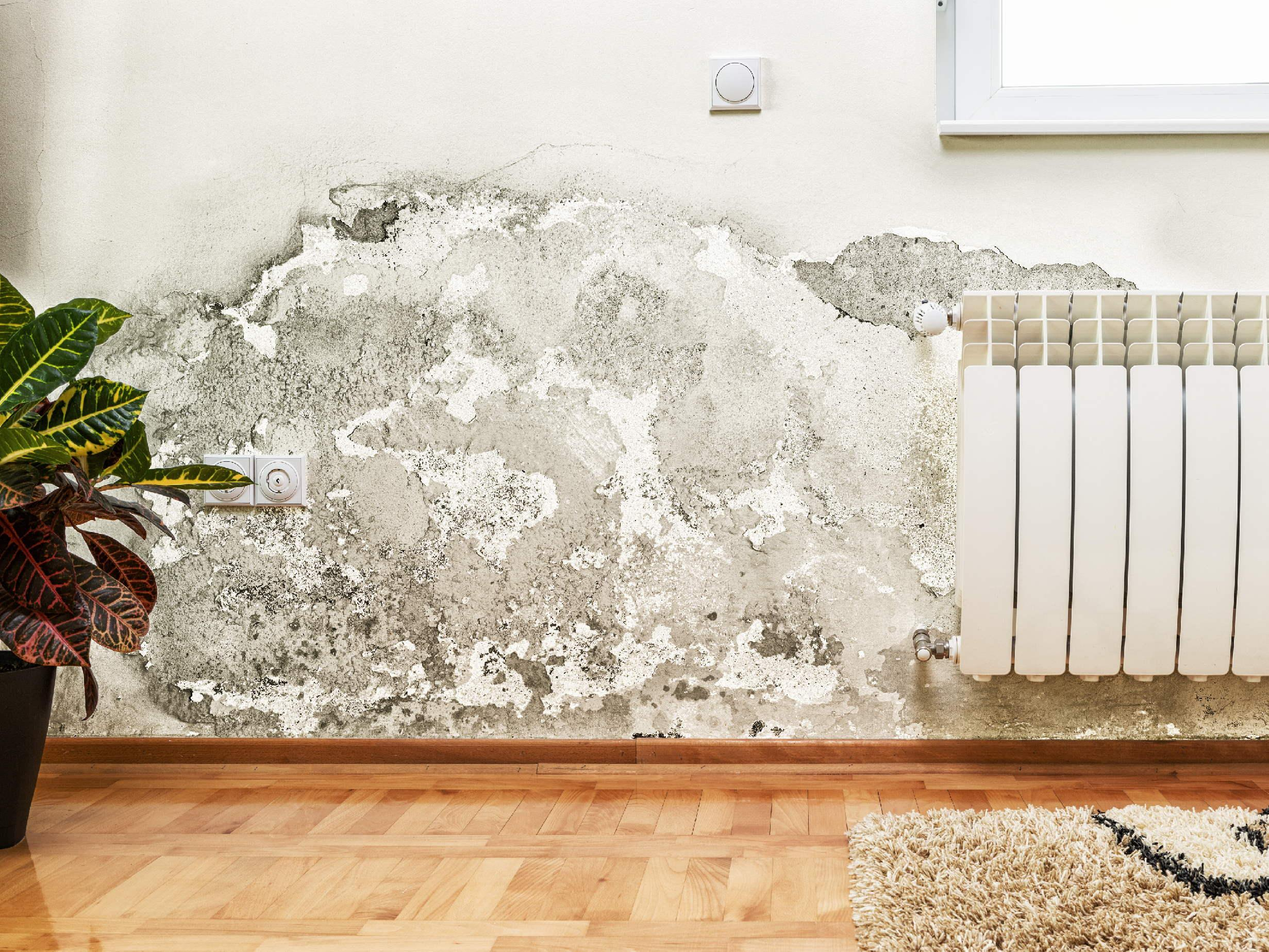 Everything you need to know about damp – for landlords and tenants