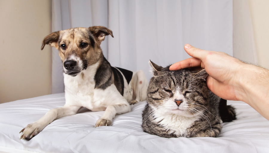 What Landlords Should Know About Tenants and Pets